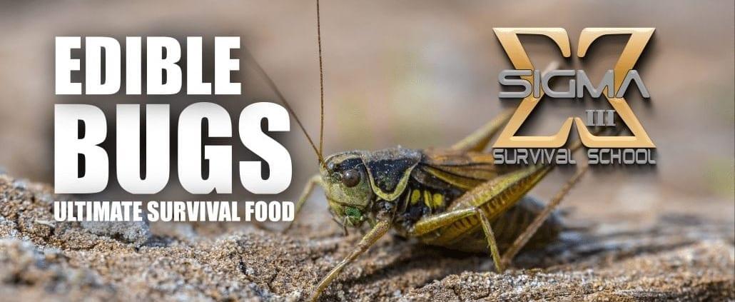 edit_bugs